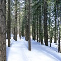 Another option is to head into the trees, paralleling a likely-hidden summer hiking trail.- Inyo Craters