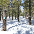 Blue blazes mark the trail to Deer Mountain, though you'll have to veer from this path to reach the craters.- Inyo Craters