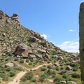 Giant cacti are peppered throughout the landscape.- Tom's Thumb