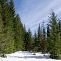 Pumice Loop Snow Trail in the Willamette National Forest.- Pumice Loop Snow Trail