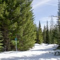 Some trail markers are on trees, while others are on poles.- Pumice Loop Snow Trail