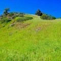 Rolling hills along the ridgeline.- Seaview Trail to Inspiration Point