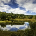 Mash reflection.- Manistee River Trail Loop