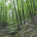Forest along the North Country Trail.- Manistee River Trail Loop