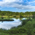 The Manistee River.- Manistee River Trail Loop