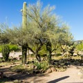 Desert garden at Burro Creek.- Burro Creek Campground