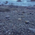 Nearby beaches are littered with different types of seashells. - Bicentennial Campground