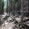 The dense timber area surrounding the Evergreen Mountain West Trail- Alderfer/Three Sisters Park Loop