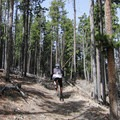 Leave your earbuds in the car and keep your head on a swivel as you'll be sharing the trail with plenty of mountain bikers- Alderfer/Three Sisters Park Loop
