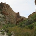 Spring brings bright green vegetation to the dry canyon.- Owl Canyon hike