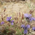 Flashes of purple color in the canyon.- Owl Canyon hike