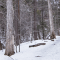 The well-traveled path.- Kaaterskill Falls Snowshoe