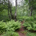 Trail continuing to tent sites 2 through 4- Denali Lookout North + Campground