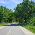 Lush fields and overhanging trees.- Sacramento Northern Bikeway