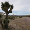 Joshua tree near one of the sites.- Owl Canyon Campground