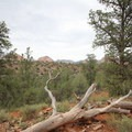 Sedona's sandstone monuments, viewed from the lower part of the trail looking north.- Cathedral Rock
