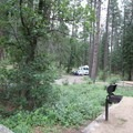 Sites in the east loop.- Pine Flat Campground