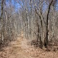 The trail toward the T-intersection.- Compton Peak