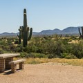 The campground is on a bit of a rise, providing nice views.- McDowell Mountain Campground