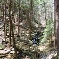 A tributary to Fiery Gizzard Creek.- Fiery Gizzard Trail