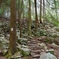 Rocky trail to the base of the falls.- Foster Falls