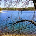 Between Ice House Cove and Thoreau's Cove.- Walden Pond + Adams Woods