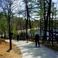 Path to the main beach.- Walden Pond + Adams Woods