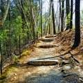 The Esker Trailhead.- Walden Pond + Adams Woods