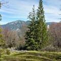 Starting to see trees.- Santa Ana River Trail to Angeles Oaks