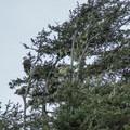 Bald eagle at Winema Beach.- Winema Beach