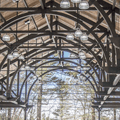 The elegant ceiling structure.- Mohonk Ice Skating Pavilion