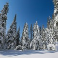 Pristine winter conditions along the trail.- Yuba Trail