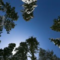 Blue skies over a white alpine forest.- Stagecoach Trail