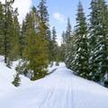 Nanny Creek Trail.- Nanny Creek / Dry Lake Trail