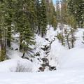 A creek along the Nanny Creek Trail.- Nanny Creek / Dry Lake Trail