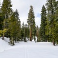 The mountain's tall trees provide a great backdrop for this ski route.- Nanny Creek / Dry Lake Trail