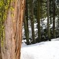 Trees and creeks along the path.- Nanny Creek / Dry Lake Trail