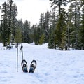 The trail begins by following NF 29N22.- Christie Hill Snowshoe