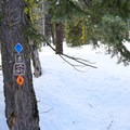 Blue diamond blazes mark the trails throughout this area.- Christie Hill Snowshoe