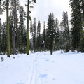 Trails around the base of Christie Hill are great for those of moderate abilities.- Christie Hill Snowshoe