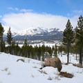 Views from the Burnside Lake Trail.- Hope Valley Outdoors Outfitters