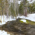 Some of the forest trails pass by streams and meadows which flow even with the heavy snow.- Secret Meadow