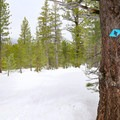 Blue diamond blazes mark the Secret Meadow Trail as it leaves the trees and enters the meadow.- Secret Meadow