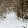 The trail is very wide at first, but it narrows later.- Silver Lake Mountain
