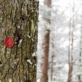 The trail follows the red markers.- Silver Lake Mountain