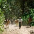Road to Latuvi. Photo by Kira Richards.- Sierra Norte of Oaxaca