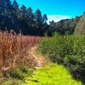 Road from Cuajimoloyas. Photo by Kira Richards.- Sierra Norte of Oaxaca
