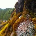 Cactus and moss. Photo by Kira Richards.- Sierra Norte of Oaxaca