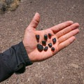 A selection of Apache tears found on this trip.- Scotty's Junction Rockhounding Area