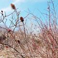 Dog roses on the hike.- Serra di Celano